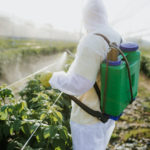Long-Term Pesticide Exposure Linked to Development of Multiple Myeloma Precursor
